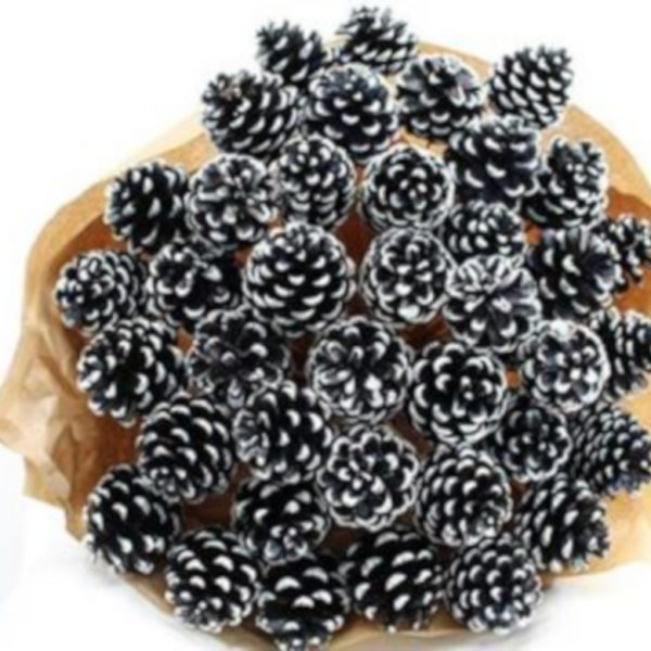 Pine Cone Black with white tip x 40