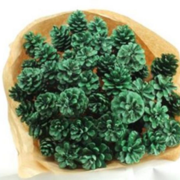 Pine Cone Glitter Green x 50